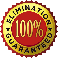 elimination-badge