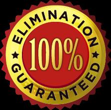 elimination-badge
