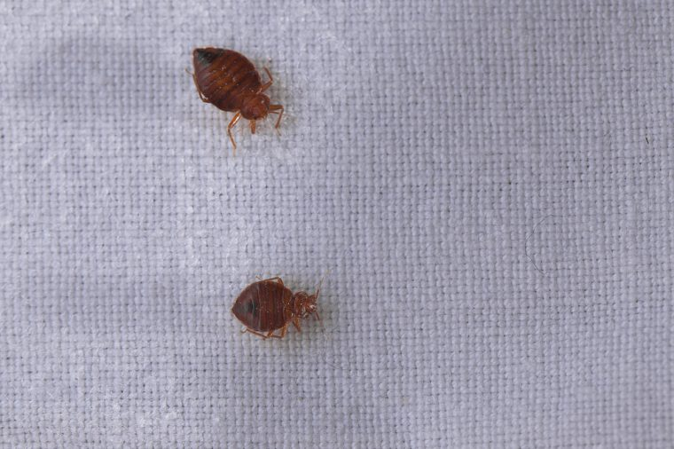 How-to-Find-Bed-Bugs-in-Your-Car—and-How-to-Get-Rid-of-Them-4-760x506
