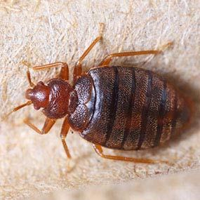 Washington__Bed_bug_exterminator
